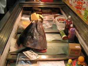 How big is the tuna head?